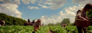 jamestown farming episode 3